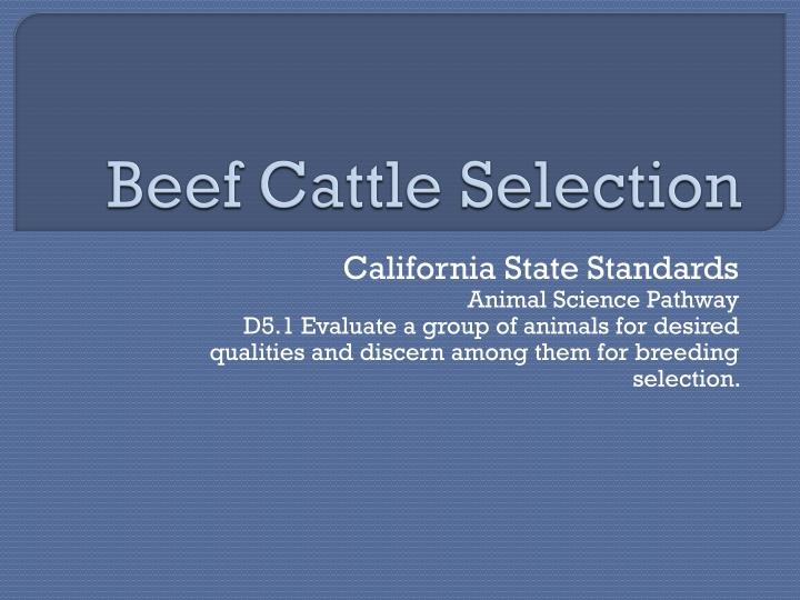beef cattle selection n.