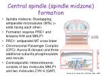 central spindle spindle midzone formation