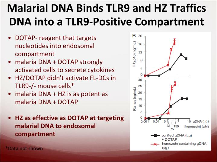 Malarial DNA Binds TLR9 and HZ Traffics DNA into a TLR9-Positive Compartment
