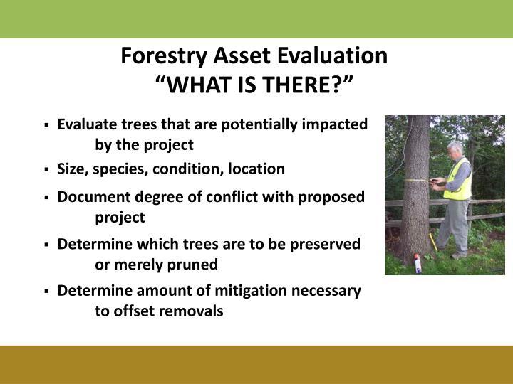 Forestry Asset Evaluation