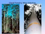 clonal forestry mass selection
