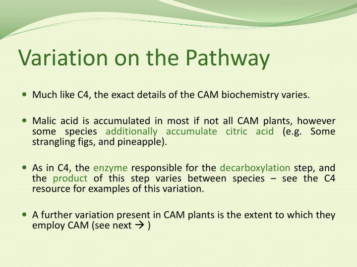 Variation on the Pathway