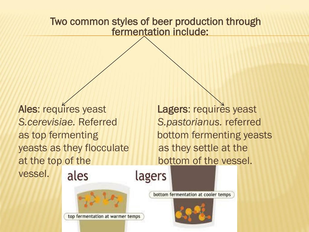 PPT - Microbiology of Fermented Foods and Beverages By