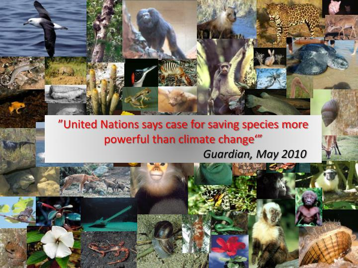 """""""United Nations says case for saving species more powerful than climate change'"""""""