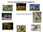 from mechanism to pattern3