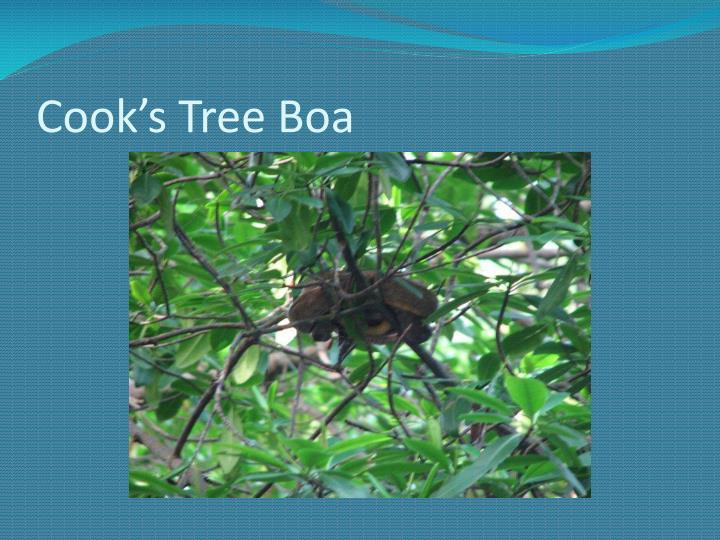 Cook's Tree Boa