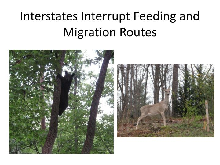 Interstates Interrupt Feeding and Migration Routes
