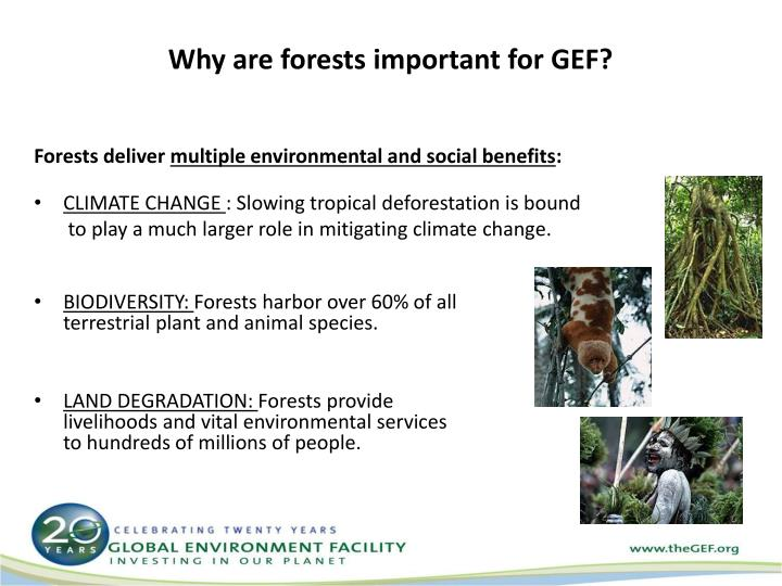 Why are forests important for GEF?