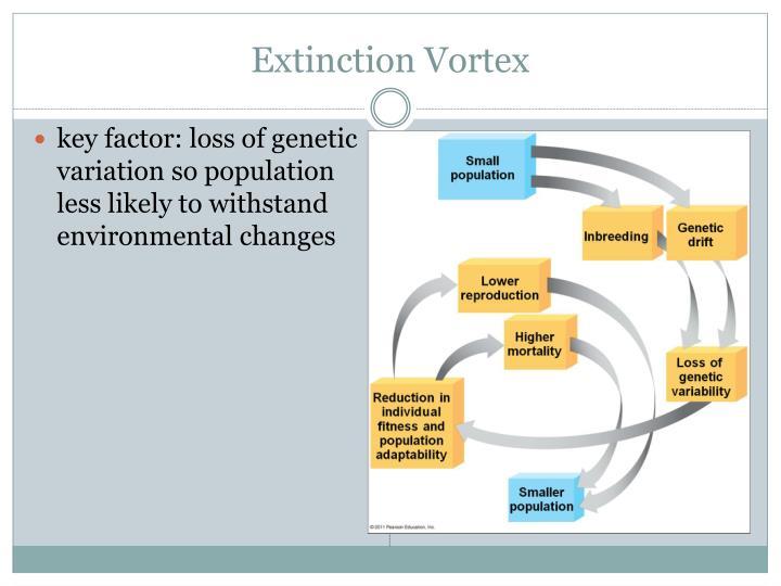 Extinction Vortex