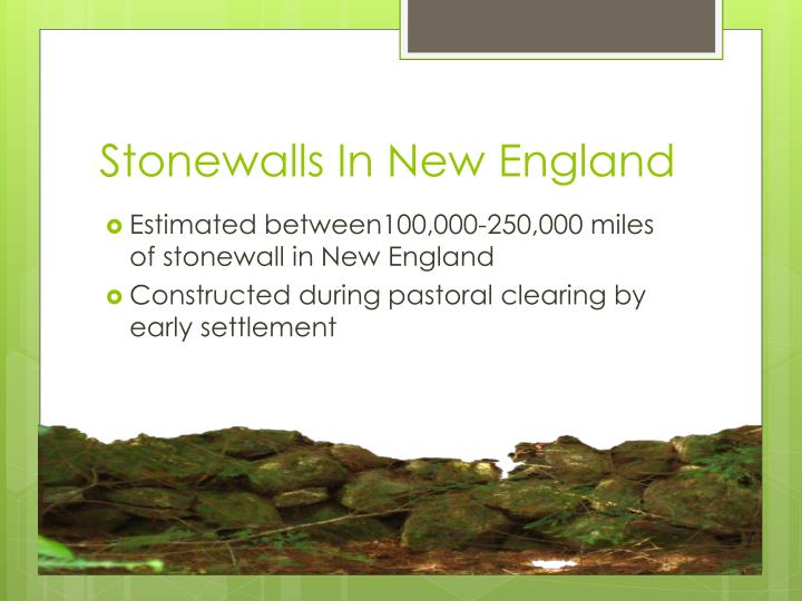 Stonewalls in new england