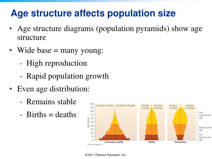 Age structure affects population size