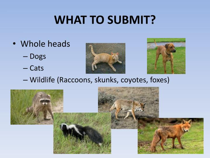 WHAT TO SUBMIT?