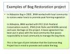 examples of bog restoration project