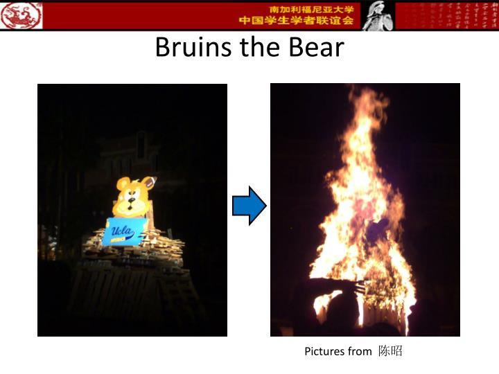 Bruins the Bear