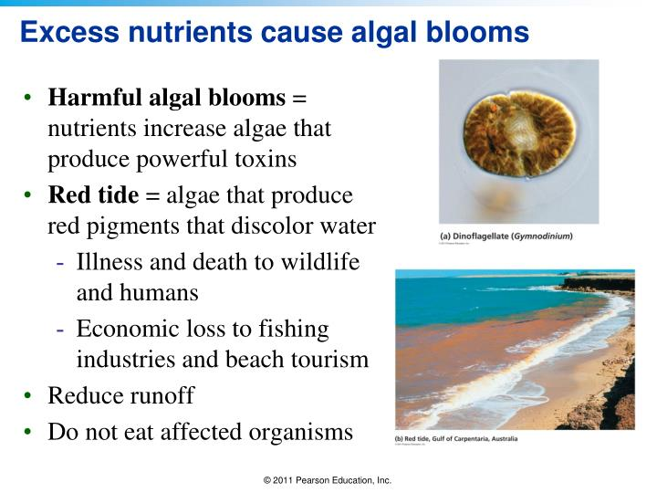 Excess nutrients cause algal blooms