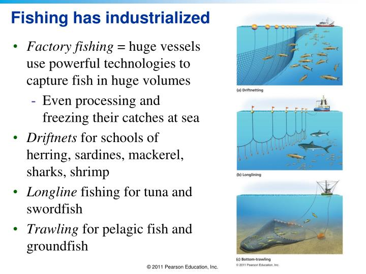 Fishing has industrialized