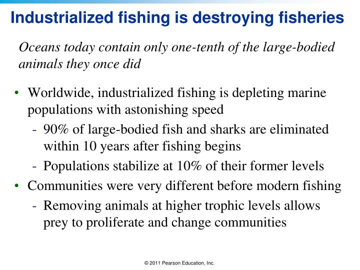 Industrialized fishing is destroying fisheries
