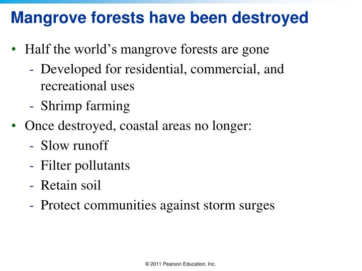 Mangrove forests have been destroyed