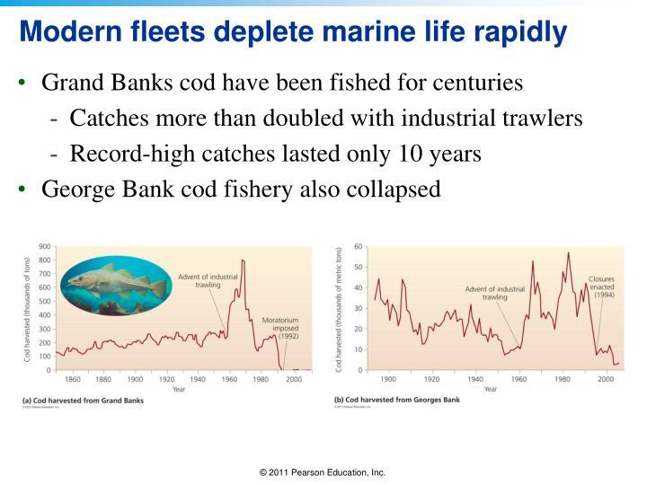 Modern fleets deplete marine life rapidly