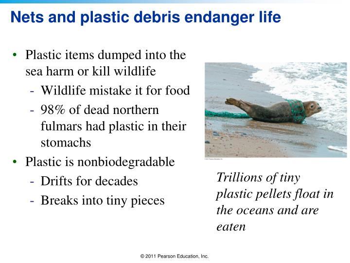 Nets and plastic debris endanger life