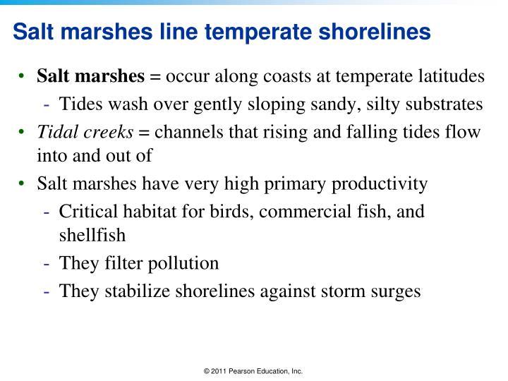 Salt marshes line temperate shorelines