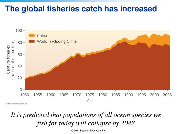 The global fisheries catch has increased