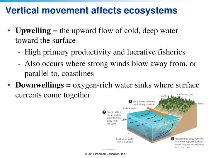 Vertical movement affects ecosystems