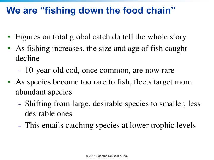 """We are """"fishing down the food chain"""""""
