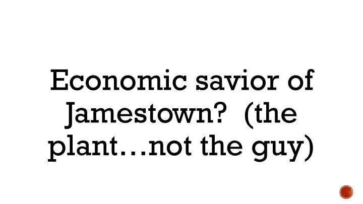 Economic savior of Jamestown?  (the plant…not the guy)