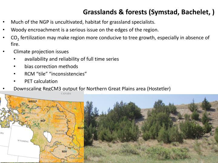 Grasslands & forests (
