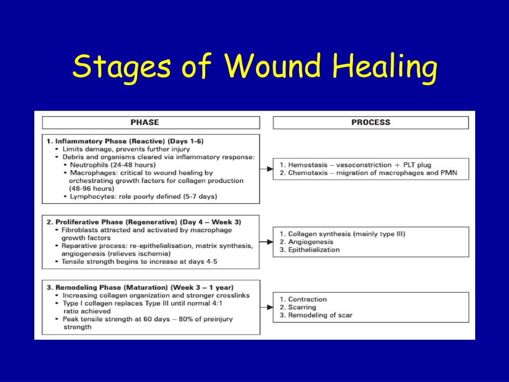 PPT - WOUNDS-WOUND HEALING & CARE PowerPoint Presentation - ID:1634475