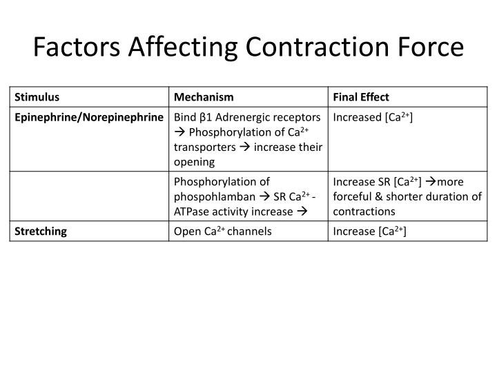 Factors Affecting Contraction Force