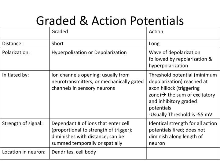 Graded & Action Potentials