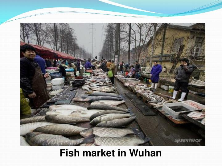 Fish market in Wuhan