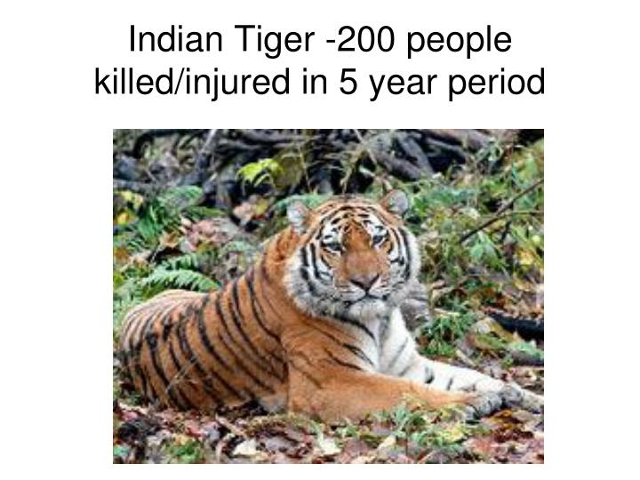 Indian Tiger -200 people killed/injured in 5 year period