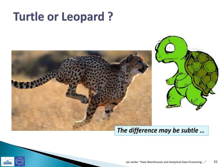 Turtle or Leopard ?