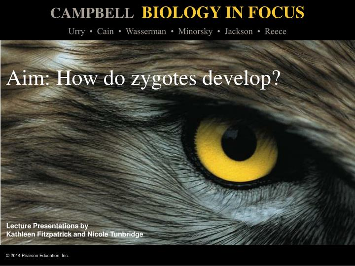 Aim how do zygotes develop
