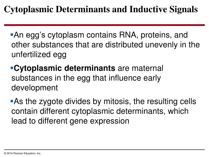 Cytoplasmic Determinants and Inductive Signals
