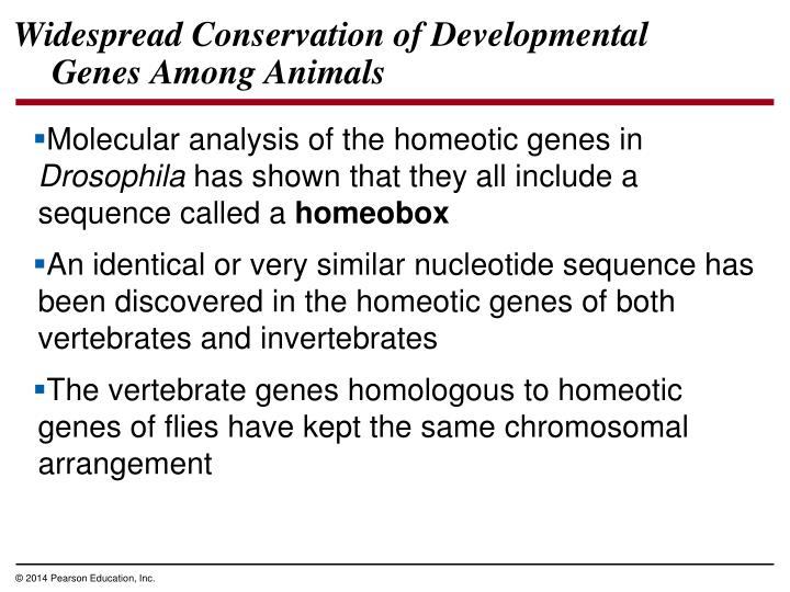 Widespread Conservation of Developmental Genes Among Animals