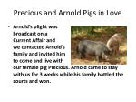 precious and arnold pigs in love1