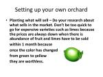 setting up your own orchard3