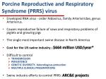 porcine reproductive and respiratory syndrome prrs virus