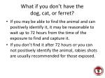 what if you don t have the dog cat or ferret