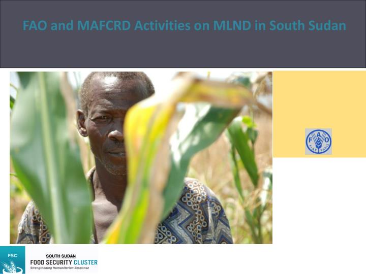 fao and mafcrd activities on mlnd in south sudan n.