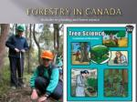 forestry in canada12