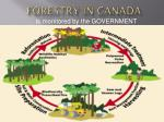 forestry in canada7