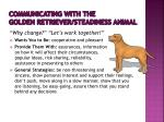 communicating with the golden retriever steadiness animal