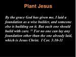 plant jesus