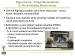 opportunity forest biomaterials in the emerging bioeconomy