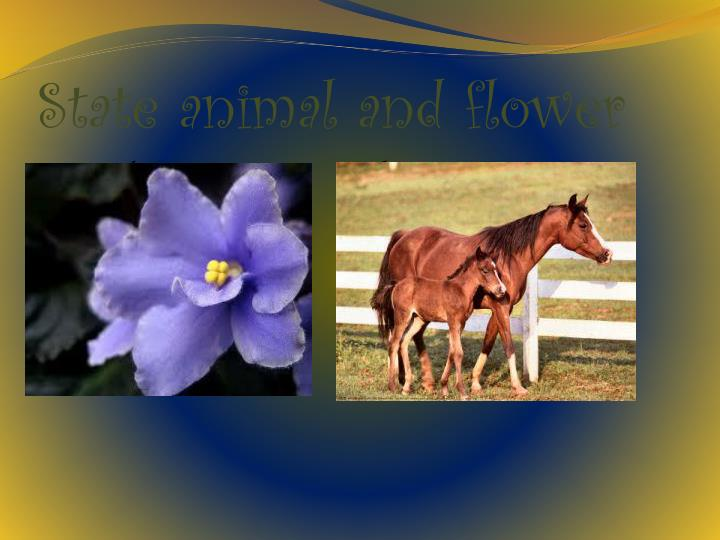 State animal and flower
